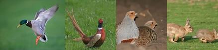 canard-faisan-perdrix-lapin